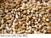 Купить «close up of malt or cereal grains», фото № 24132482, снято 6 сентября 2016 г. (c) Syda Productions / Фотобанк Лори
