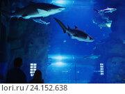 Купить «father with child visitors a large oceanarium», фото № 24152638, снято 2 ноября 2016 г. (c) Майя Крученкова / Фотобанк Лори