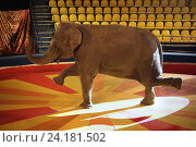 Купить «Слон на арене цирка», фото № 24181502, снято 9 июня 2014 г. (c) Татьяна Белова / Фотобанк Лори