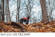 Собака на прогулке, одетая в собачьи одежды. Стоковое фото, фотограф Татьяна Назмутдинова / Фотобанк Лори