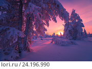 Купить «Зимний пейзаж с закатом, деревья под снегом», фото № 24196990, снято 4 января 2015 г. (c) Оксана Владимировна Грачева / Фотобанк Лори
