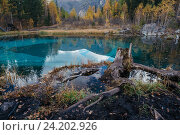 Небольшое голубое озеро в лесу на Алтае, Россия, фото № 24202926, снято 27 сентября 2016 г. (c) Liseykina / Фотобанк Лори