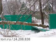 Купить «Последствия ледяного дождя. Дерево упало на электрические провода», эксклюзивное фото № 24208838, снято 11 ноября 2016 г. (c) Елена Коромыслова / Фотобанк Лори