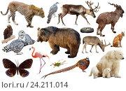 Купить «animal collection asia», фото № 24211014, снято 25 мая 2019 г. (c) Яков Филимонов / Фотобанк Лори