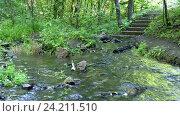 Купить «Лесной ручей к которому спускаются ступеньки», видеоролик № 24211510, снято 10 июля 2016 г. (c) Иванов Алексей / Фотобанк Лори