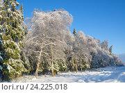 Купить «Пейзаж с заснеженным лесом в солнечный день», эксклюзивное фото № 24225018, снято 15 ноября 2016 г. (c) Елена Коромыслова / Фотобанк Лори