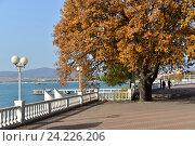 Купить «Осенний пейзаж, набережная, курорт Геленджик», фото № 24226206, снято 9 ноября 2016 г. (c) Игорь Архипов / Фотобанк Лори