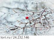 Купить «Ветки дерева и маленькое яблочко - ранетка под ледяным дождем», фото № 24232146, снято 13 ноября 2016 г. (c) Татьяна Белова / Фотобанк Лори