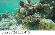 Купить «Рыбы плавают среди кораллов в Красном море», видеоролик № 24233410, снято 4 ноября 2016 г. (c) Михаил Коханчиков / Фотобанк Лори