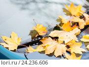 Купить «close up of car wiper with autumn leaves», фото № 24236606, снято 12 октября 2016 г. (c) Syda Productions / Фотобанк Лори