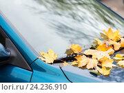 Купить «close up of car wiper with autumn leaves», фото № 24236910, снято 12 октября 2016 г. (c) Syda Productions / Фотобанк Лори