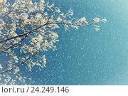 Купить «Зимний пейзаж - ветви дерева в инее на фоне неба под падающим снегом, Зимний фон, тональная коррекция», фото № 24249146, снято 9 января 2016 г. (c) Зезелина Марина / Фотобанк Лори