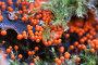 Миксомицет Трихия обманчивая (Trichia decipiens), фото № 24253482, снято 27 августа 2016 г. (c) Александр Курлович / Фотобанк Лори