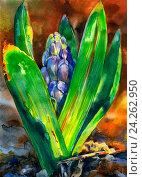 Синий гиацинт, освещенный солнцем. Акварель. Стоковая иллюстрация, иллюстратор Елена Лобовикова / Фотобанк Лори