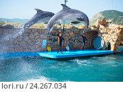 Купить «Анапский Утришский дельфинарий. Шоу морских млекопитающих», фото № 24267034, снято 6 июня 2015 г. (c) Игорь Архипов / Фотобанк Лори