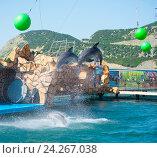 Купить «Анапский Утришский дельфинарий. Шоу морских млекопитающих», фото № 24267038, снято 6 июня 2015 г. (c) Игорь Архипов / Фотобанк Лори