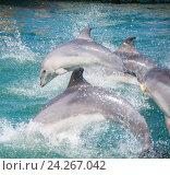 Купить «Анапский Утришский дельфинарий. Шоу морских млекопитающих», фото № 24267042, снято 6 июня 2015 г. (c) Игорь Архипов / Фотобанк Лори