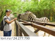 Турист кормит зебру (2016 год). Редакционное фото, фотограф Наталья Гармашева / Фотобанк Лори