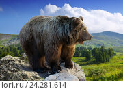 bear on rock. Стоковое фото, фотограф Яков Филимонов / Фотобанк Лори