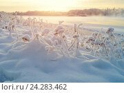 Купить «Winter landscape with frosty winter plants on the background at sunset and winter river cold mist, winter landscape scene», фото № 24283462, снято 9 января 2016 г. (c) Зезелина Марина / Фотобанк Лори