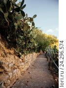 Аллея с кактусами, Кастелле, Испания. Стоковое фото, фотограф Елена Корнеева / Фотобанк Лори