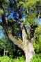 Толстый ствол старой ивы, фото № 24306470, снято 26 сентября 2016 г. (c) Владимир Кошарев / Фотобанк Лори