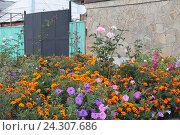 Красивый дачный палисадник. Стоковое фото, фотограф Ирина Водяник / Фотобанк Лори