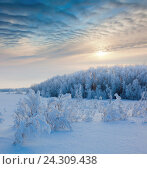 Купить «Трава и деревья в инее во время сильного мороза», фото № 24309438, снято 23 января 2011 г. (c) Владимир Мельников / Фотобанк Лори