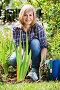 Mature woman planting corn-flag flower in garden on sunny day, фото № 24311562, снято 17 июня 2016 г. (c) Яков Филимонов / Фотобанк Лори