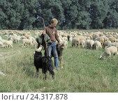 Купить «Shepherds, flock of sheep, dogs, animals, mammals, sheep, Ovis, man, shepherd, pasture, meadow, graze, there graze, pets, benefit animals, ruminants, cattle...», фото № 24317878, снято 8 августа 2002 г. (c) mauritius images / Фотобанк Лори