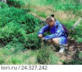 Woman, bilberries, pick, summers, walking, walk, rain jacket, jacket, shrub, berries, berry, bilberry, collect, footpath, wood, edge the forest, фото № 24327242, снято 11 июля 2000 г. (c) mauritius images / Фотобанк Лори