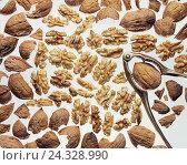 Купить «Walnuts, cores, peels, nutcrackers, Still life, Juglans, welsch nut, nuts, walnut, peel, nut, nutshells, walnut peels, walnut cores, opened, crack, core», фото № 24328990, снято 14 июня 2000 г. (c) mauritius images / Фотобанк Лори