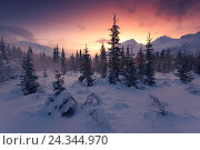 Купить «Coniferous forest in the blizzard in the Lyngen alps, Norway», фото № 24344970, снято 6 февраля 2016 г. (c) mauritius images / Фотобанк Лори