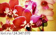 Купить «Orchid, blossoming», фото № 24347070, снято 3 апреля 2016 г. (c) mauritius images / Фотобанк Лори