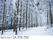 Footpath in the forest, snow, фото № 24378750, снято 26 апреля 2017 г. (c) mauritius images / Фотобанк Лори