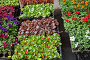 A flower's sprouts on street market in spring sunny day, фото № 24387502, снято 1 мая 2016 г. (c) Юлия Кузнецова / Фотобанк Лори