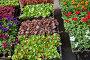 A flower's sprouts on street market in spring sunny day, фото № 24387502, снято 1 мая 2016 г. (c) Юлия Кузнецова / Фотобанк Лори