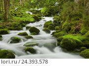 Купить «moss-overcast stones, influx of the Orbe, Vallorbe, Vaud, Switzerland», фото № 24393578, снято 21 августа 2018 г. (c) mauritius images / Фотобанк Лори