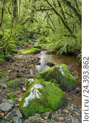Купить «Wood, ferns, moss, brook, Fiordland National Park, Southland, south Island, New Zealand», фото № 24393862, снято 21 сентября 2018 г. (c) mauritius images / Фотобанк Лори