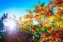 Осенний пейзаж. Красные листья рябины в контровом освещении, фото № 24429218, снято 24 сентября 2016 г. (c) Евгений Мухортов / Фотобанк Лори