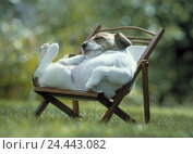 Купить «Deck chair, Jack Russel terrier, lie, sleep, rest dog, dogs, pet, pets, mammal, mammals, dog puppy, dog puppy, puppy, puppy, terrier, there rest, dog breed, pedigree dog, summers», фото № 24443082, снято 13 октября 2018 г. (c) mauritius images / Фотобанк Лори