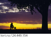Купить «Scenery, silhouette, tree, couple, baby carriage, walk, family, evening walk, parents, infant, buggy, together, activity, family life, excursion, vacation...», фото № 24449154, снято 2 ноября 2005 г. (c) mauritius images / Фотобанк Лори