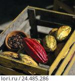 Купить «Brazil, Bahia, postage Seguro, Wooden box, cocoa fruits, cacao beans, South America, harvest, cocoa foetus, Theobroma cacao, beans, cocoa foetus, semen...», фото № 24485286, снято 18 августа 2018 г. (c) mauritius images / Фотобанк Лори