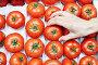 Женская рука берет спелый красный томат из ящика, фото № 24521438, снято 9 декабря 2016 г. (c) Никита Ковалёв / Фотобанк Лори