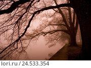 Купить «Lakeside, trees, nebulous mood,», фото № 24533354, снято 4 апреля 2008 г. (c) mauritius images / Фотобанк Лори