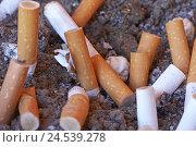 Купить «Ashtray, Sand, cigarette springs, expressed, close up,», фото № 24539278, снято 25 июня 2008 г. (c) mauritius images / Фотобанк Лори