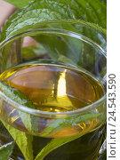 Купить «Peppermint tea at peppermint leaves,», фото № 24543590, снято 23 июля 2018 г. (c) mauritius images / Фотобанк Лори