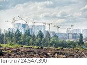 Купить «Вид на строящиеся корпуса нового 17 микрорайона Зеленограда через вырубку и узкую полоску леса», фото № 24547390, снято 13 июля 2016 г. (c) Сайганов Александр / Фотобанк Лори
