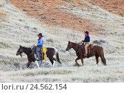 Купить «Cowboys, horses, riding, USA, Wyoming, Shell,», фото № 24562154, снято 22 августа 2018 г. (c) mauritius images / Фотобанк Лори