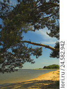 Купить «Summer Idyll, Kurisches lagoon, Juodkrante, national park health resort broad bay bar, Lithuania,», фото № 24582942, снято 1 июля 2006 г. (c) mauritius images / Фотобанк Лори